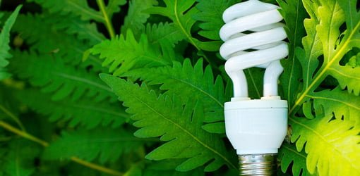 CFL light bulb on green ferns.