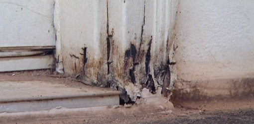 Rotten door casing on entry door.
