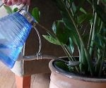 Watering houseplant.