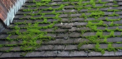 Green moss growing on roof. & How to Remove Moss from a Roof | Todayu0027s Homeowner memphite.com