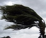 Palm tree blowing in hurricane wind.
