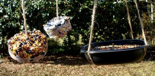 Homemade suet bird feeders.