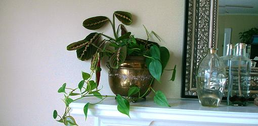 Beginner S Guide To Caring For Houseplants Today S Homeowner