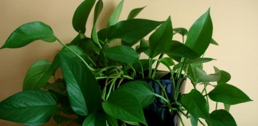 How To Grow Houseplants In Low Light Conditions
