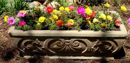 Flowers in concrete planter
