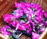 Cut flowers in basket.