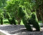 Topiary shrubs shaped like dogs