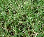 How to Control Bermuda Grass
