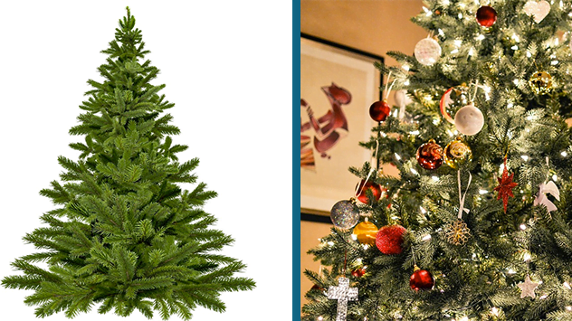 Christmas Tree Png Images.How To Select And Decorate A Christmas Tree Today S Homeowner