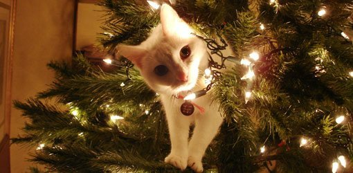 Cat climbing on Christmas tree