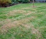 How to Identify the Cause of Brown Spots In Your Lawn