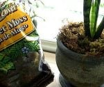 How to Dress Up Your Houseplants with Mulch