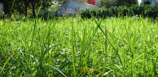 Spring Lawn Care Guide Today S Homeowner