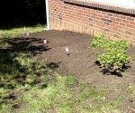 How to Amend Soil Around Shrubs and Garden Plants