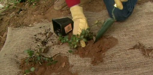 How To Plant Ground Cover To Prevent Erosion Today S