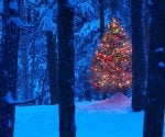 Decorated lit Christmas tree in the wood with snow