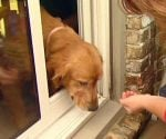 Dog using pet door