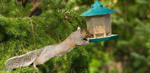 keep squirrel gardener from to how squirrels netting away and feeder out of bird the feeders proof pole garden baffle