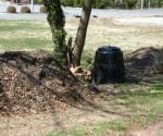 Compost pile next to tree