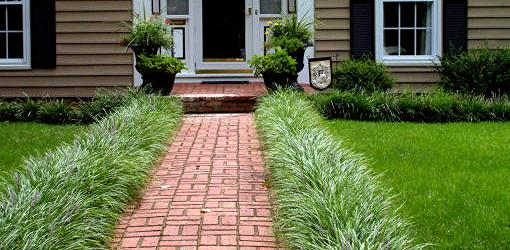 Monkey grass growing on either side of a brick walk