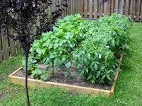 Wood raised bed with vegetables planted in it