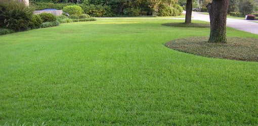 how to kill nutgrass in flower beds