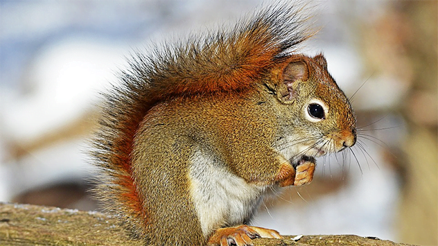 How to Keep Squirrels from Damaging Your Home | Today's Homeowner