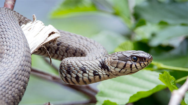 10 Must-Know Facts About Snakes — Read to Stay Safe