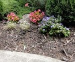 Planting bed covered with wood mulch