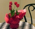 Tulips blooming indoors in pot.