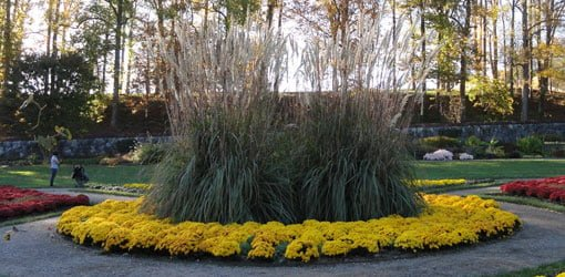 How to grow ornamental grasses in your yard todays homeowner giant pampas grass at biltmore gardens workwithnaturefo