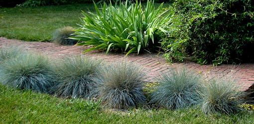How to grow ornamental grasses in your yard today 39 s for Small blue ornamental grass