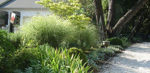 Ornamental grasses tucked into a border planting.