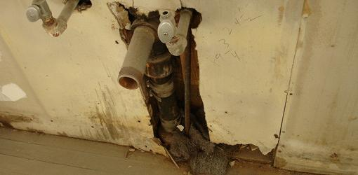 Moldy, water damaged drywall around plumbing pipes.