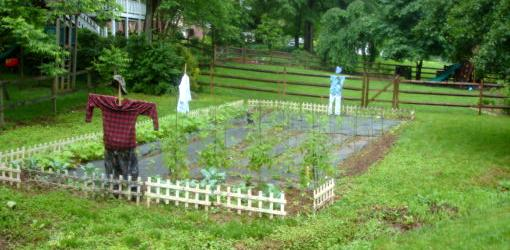Garden plot with scarecrows and rubber owls.