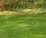 Lawn with healthy, green grass.