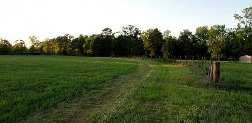 Open grassy field with trees in distance.