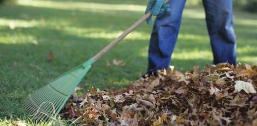Raking leaves burns calories.