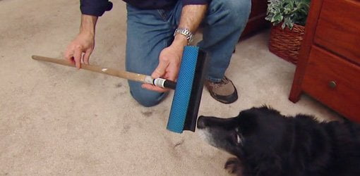 Easy Way To Remove Pet Hair From Carpet Today S Homeowner