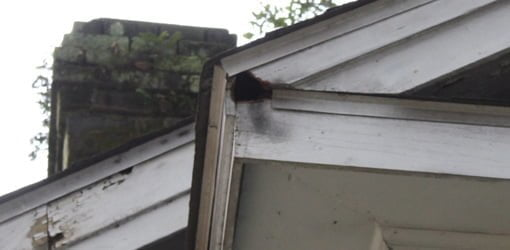 Squirrel hole in eave fascia board.