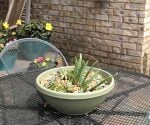 southern-patio-succulents