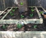 Jeanna and Ron's Dog-Resistant Raised Garden Bed