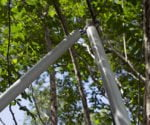 Trimming Trees? Do This to Extend Your Reach 5 Feet